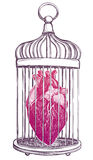 Birdcage with anatomical heart. Royalty Free Stock Image