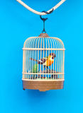 Birdcage With Artificial Colorful Bird. Royalty Free Stock Photo