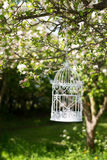 Birdcage In Blossom Stock Photo