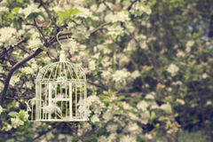 Birdcage In Blossom. Open birdcage with feathers in tree with apple blossom Stock Image