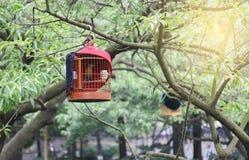 Birdcage Stock Image
