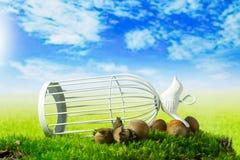 Birdcage en hazelnoten op de groene fantasieweide Stock Afbeelding