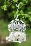 Birdcage with flowers inside Royalty Free Stock Photos