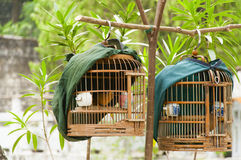 Birdcage Royalty Free Stock Photos