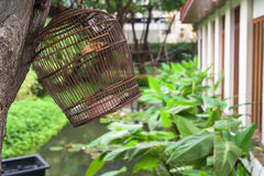 Birdcage hanging on the tree Royalty Free Stock Photo