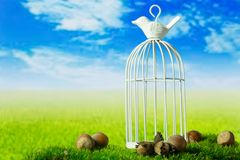 Birdcage and hazelnuts on the green fantasy meadow. Birdcage and hazelnuts on the green fantasy landscape Royalty Free Stock Photos