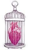 Birdcage met anatomisch hart vector illustratie