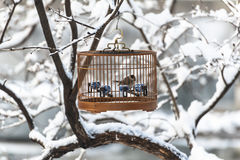 A birdcage in the snow Royalty Free Stock Photography