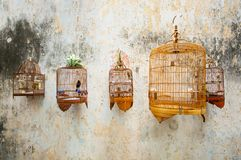 Birdcages with the birds Royalty Free Stock Image