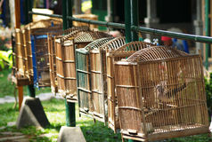 Birdcages in indonesia Royalty Free Stock Images