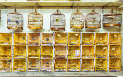 Birdcages at the Yuen Po Street Bird Garden in Hong Kong. The Bird Garden has dozens of stalls selling exotic birds, beautifully crafted bamboo cages royalty free stock photos