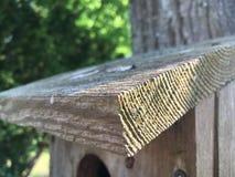 Birdcase Fotografia de Stock Royalty Free