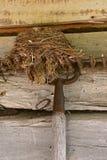 Birde-Nest auf hängenden Rührstangenklammern einer Blockhauswand Stockfotografie