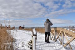 Birder on a wooden footbridge. Birder watching from a wooden footbridge in the reeds in winter season stock photo