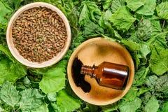 birders Ξηρά φυτά Βοτανική ιατρική, phytotherapy ιατρικά χορτάρια στοκ φωτογραφίες με δικαίωμα ελεύθερης χρήσης