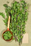 birders Ξηρά φυτά Βοτανική ιατρική, phytotherapy ιατρικά χορτάρια στοκ φωτογραφίες