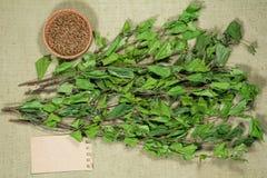 birders Ξηρά φυτά Βοτανική ιατρική, phytotherapy ιατρικά χορτάρια στοκ εικόνα με δικαίωμα ελεύθερης χρήσης