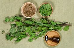birders Ξηρά φυτά Βοτανική ιατρική, phytotherapy ιατρικά χορτάρια στοκ εικόνα