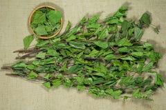 birders Ξηρά φυτά Βοτανική ιατρική, phytotherapy ιατρικά χορτάρια στοκ φωτογραφία με δικαίωμα ελεύθερης χρήσης