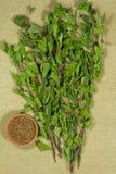 birders Ξηρά φυτά Βοτανική ιατρική, phytotherapy ιατρικά χορτάρια στοκ εικόνες