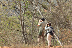 2 birders наблюдая изучающ поведение птицы в тропическом лесе стоковые изображения rf