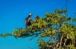 Birdf the Galapagos Royalty Free Stock Image