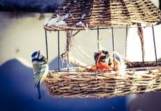 Birdfeed Стоковые Фото