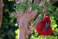 Birdfeeder с зябликом Стоковое Изображение RF