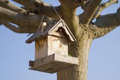 Birdfeeder. In a tree.  A Bird feeder is a device placed out-of-doors to supply bird food to birds Royalty Free Stock Photo