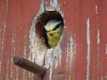 Birdfeeder Royalty-vrije Stock Foto