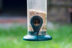 Birdfeeder in binnenplaatstuin in de zomer Stock Afbeeldingen