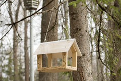 Birdfeeder. Hanging on the tree in the park Royalty Free Stock Images