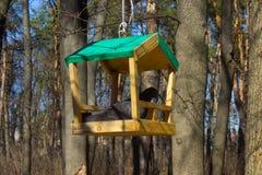 Birdfeeder. Structure in the garden in summertime Stock Photography