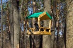 Birdfeeder. Structure in the garden in summertime Royalty Free Stock Images