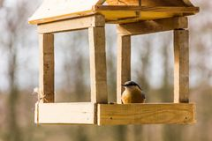 Birdfeeder. Tomtit is eating from the feeder. Birdfeeder. Tomtit is eating from the feeder in winter day Royalty Free Stock Photography
