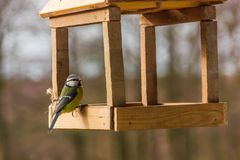 Birdfeeder. Tomtit is eating from the feeder. Birdfeeder. Tomtit is eating from the feeder in winter day Stock Images