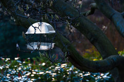 Birdfeeder in a tree Stock Photography