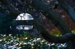 Birdfeeder in a tree. Birdfeeder hanged in a tree Stock Photography