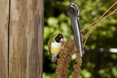 Birdfeeder at work Royalty Free Stock Photos