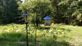 Birdfeeders在庭院里 库存图片