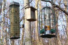 birdfeeders Obrazy Stock