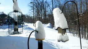 Birdfeeders covered with new snow and a bird eating in one of the feeders on a sunny winter day. stock video