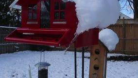 Birdfeeders cubrió con nueva nieve y un pájaro que comía en uno de los alimentadores en un día de invierno soleado en Canadá almacen de video