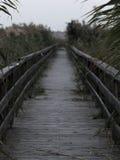 Birdge auf einem See mit Schilfen Stockbilder