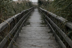 Birdge on a lake with reeds Royalty Free Stock Photo