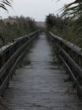 Birdge on a lake with reeds Stock Images