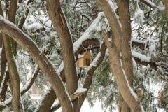 Birdhouse среди деревьев стоковая фотография
