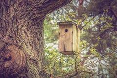 Birdhouse για τα πουλιά στο δέντρο Στοκ Εικόνες