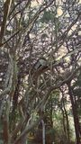 Birdhouse στον κήπο κατωφλιών στοκ φωτογραφία με δικαίωμα ελεύθερης χρήσης