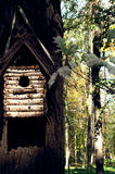 Birdhouse στο δέντρο στο δάσος φθινοπώρου Στοκ Εικόνες